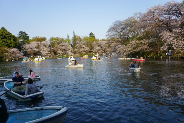 View from the lake at Inokashira Park