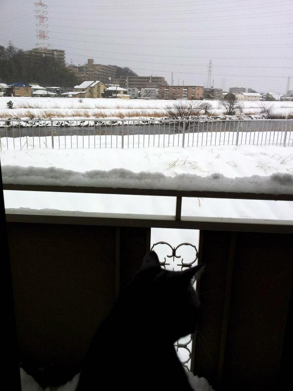 Snow in Yokohama